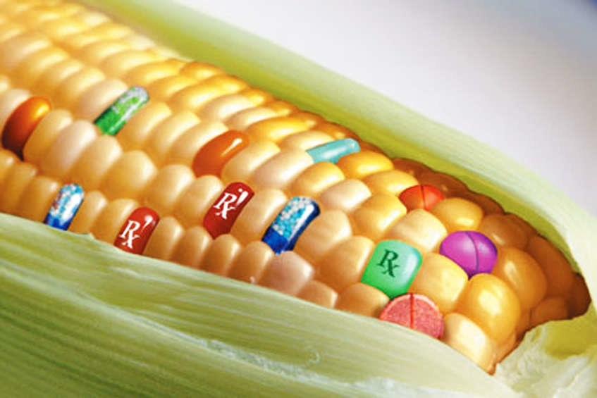 Produkty GMO - czy na pewno wiem co jem?! - strefazdrowie.pl