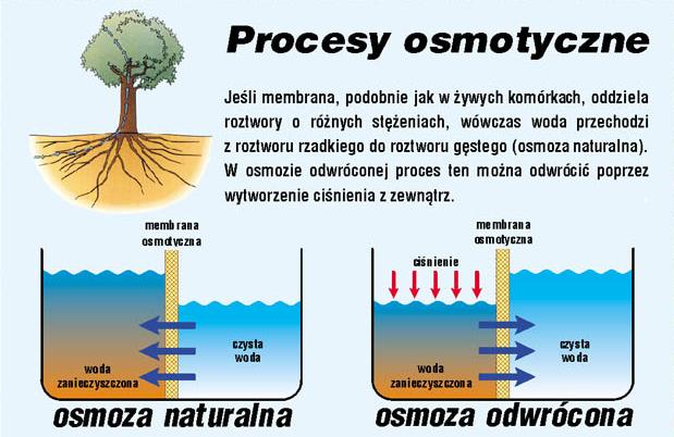 Zasada działania odwróconej osmozy - strefazdrowie.pl
