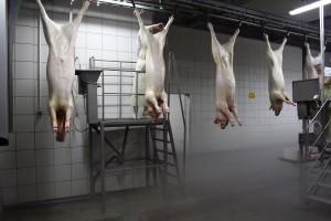 [strefazdrowie.pl] Masowa produkcja tanim kosztem rodzi zagrożenia dla naszego zdrowia