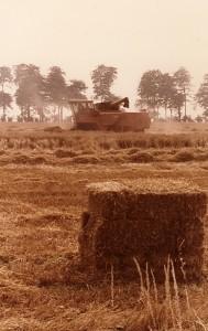 Uprawy pszenicy zajmują trzecie miejsce pod względem wielkości zbiorów.
