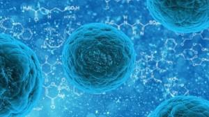Komórki macierzyste – poznaj ich działanie dla zdrowia i urody